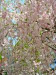 Blossom Stock 3