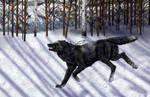 Naphar in the snow