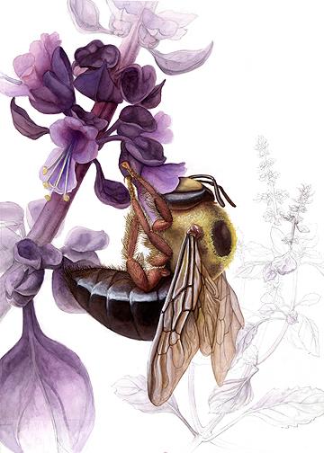 Carpenter Bee by ChristieNewman