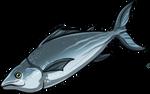 Shipjack Tuna