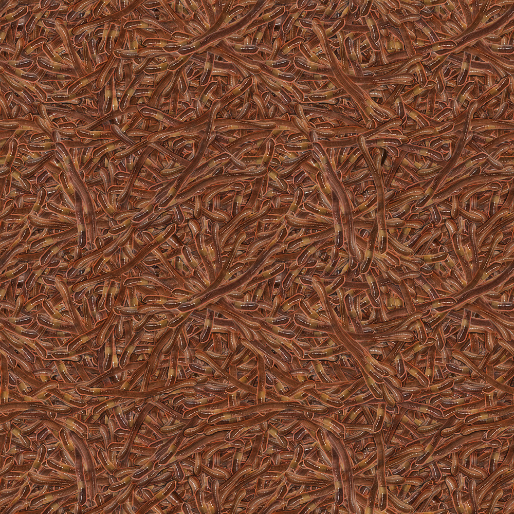 Fish Bait pt. 2 by lylejk