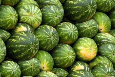 Many Melons by lylejk