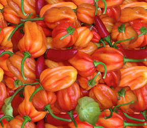 Peppers by lylejk