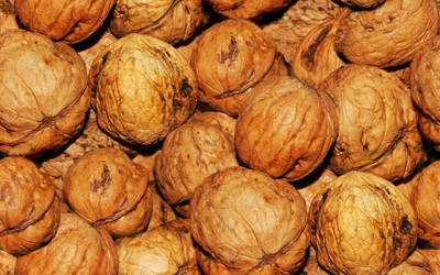 Walnuts by lylejk
