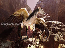 Fieruna-{Skyfolk} by trappedpigeon