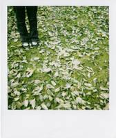 dans les feuilles. by moumine-polaroid