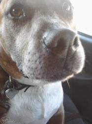 Buster, My dog.