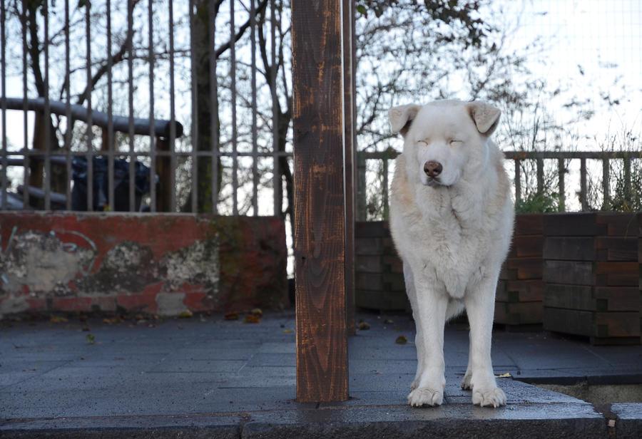 Wild dog by Trynnie