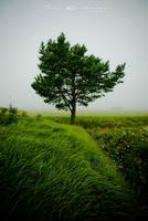One tree field by y4zu