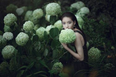 Hydrangea Queen by pholwises