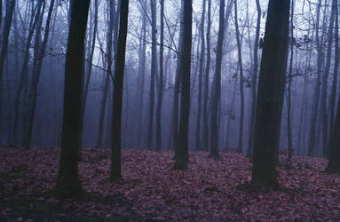 Dark wood by AlternativeSue