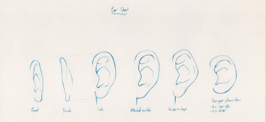 Ear Study by Pencil-Fluke