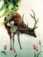 Cerf sika by claratessier