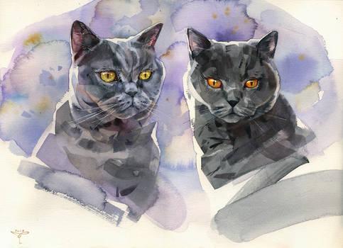 Saphira and Ursus
