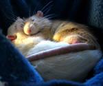 Soft Slumber