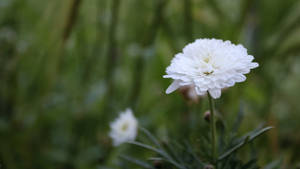 White flower 3512