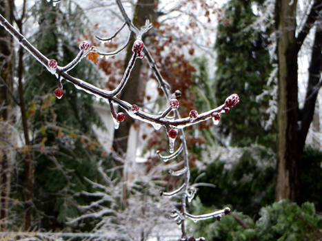 Iced branches 3