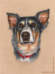 My Pet in Colored Pencil by xnicoley