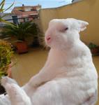 Sitting rabbit by Djinnduepuntozero