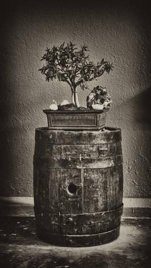 Bonsai Barrel
