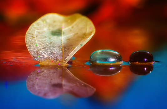 Reflection of leaf and glass pebbles