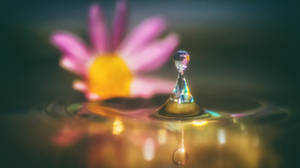 The Flower and the Pawn
