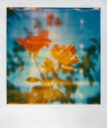 flowers3 by bluecitrusart