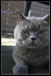 Macho cat by rammsteinfairy