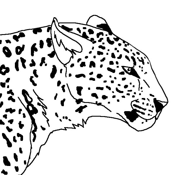 animal profile coloring pages - photo#7