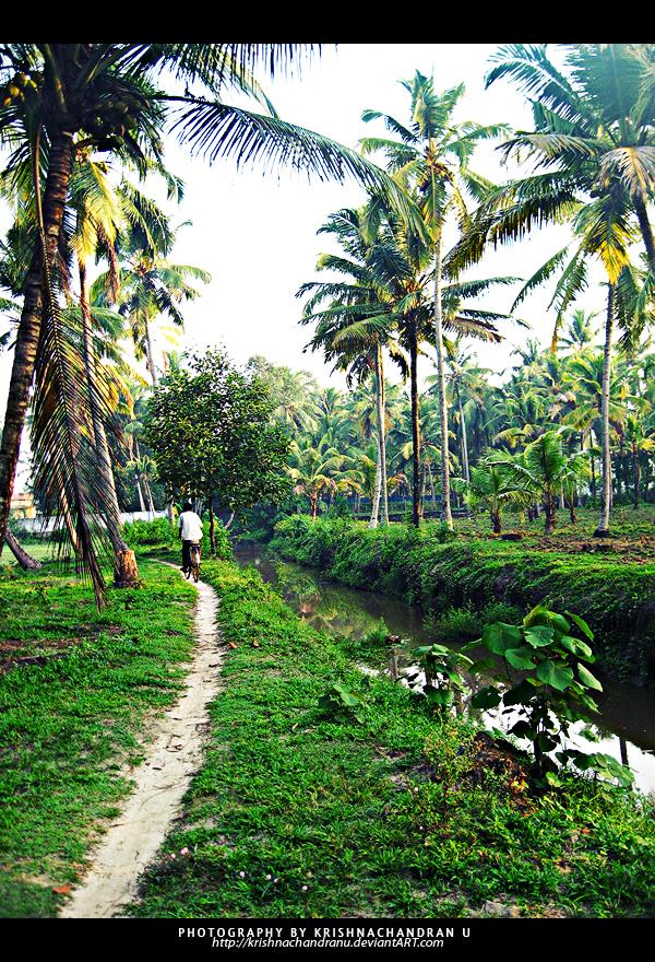 Cycle Path by krishnachandranu