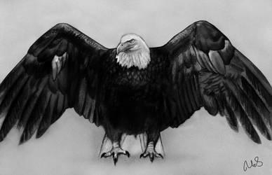 Eagle sketch by Maheen-S