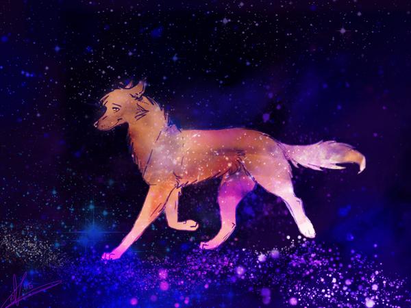 galaxy dog d by everyoneloveskoko on deviantart pets world