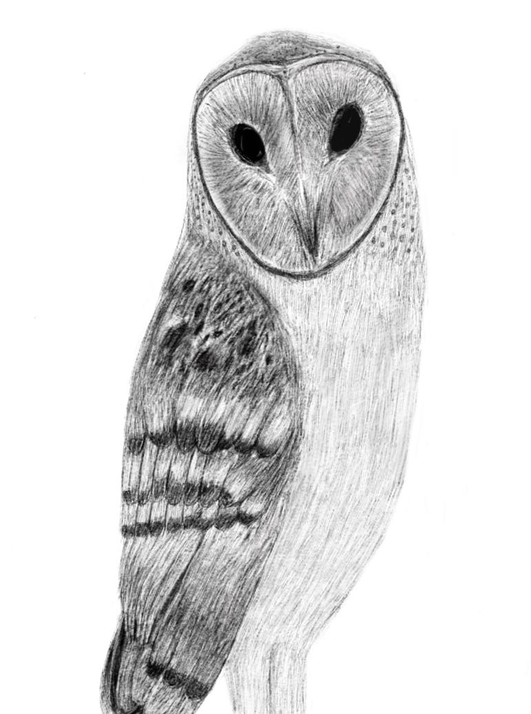 Barn owl sketch-a digital drawing by Se7J-r