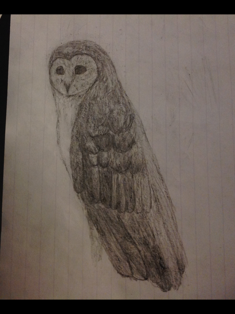 Barn owl traditional sketch by Se7J-r