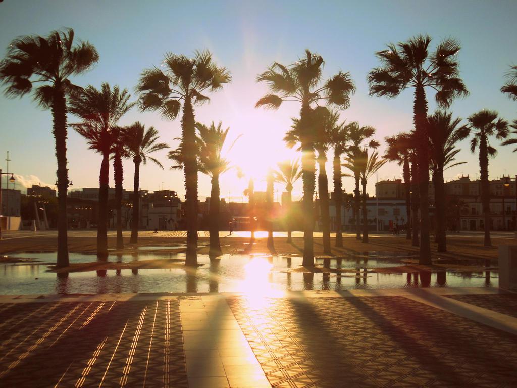 palmtrees in valencia spain
