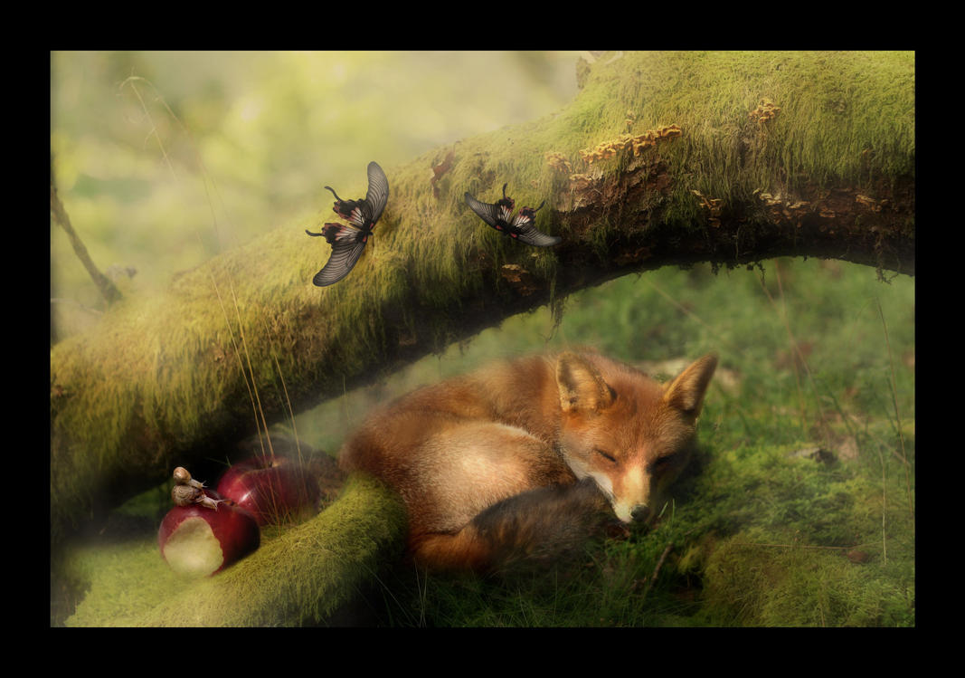 Sleepy Afternoon by LauraAshford-FineArt