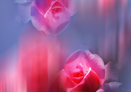 Premade Background  Roses