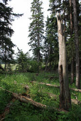 Landscape Stock 9 by FoxxStock