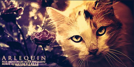 Arlequin by InconnueSecrete