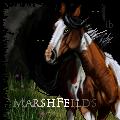 Marshfeilds by ibeany13
