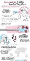 Coronavirus Tests (PCR), how do they work