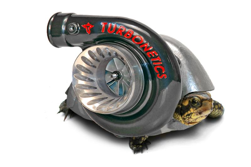 turbo turtle by swatski on deviantart