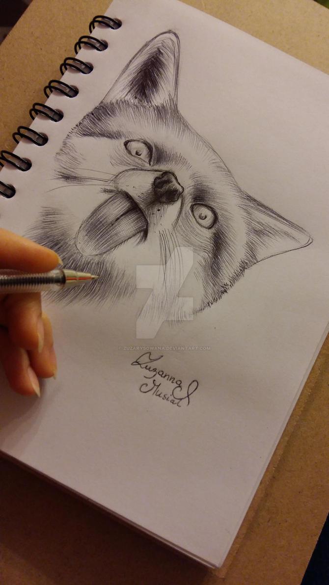 Fox , 30 minutes by Zuzarysowana