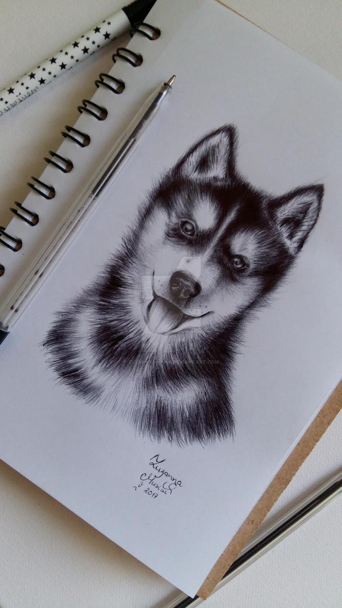 Husky by Zuzarysowana