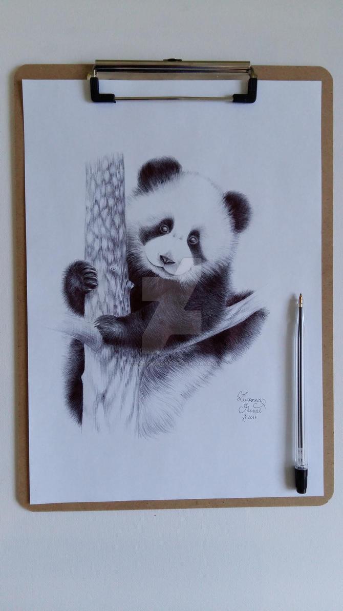 Panda by Zuzarysowana