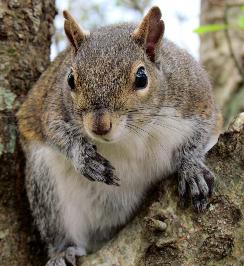 Brother,  Can You Spare A Nut? by aPatchworkProduction