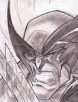 Wolverine Sketch Shot