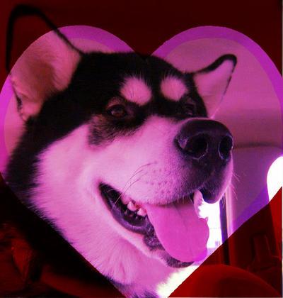 Valentine by pyro-helfier