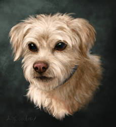 Another Dog Portrait by pyro-helfier