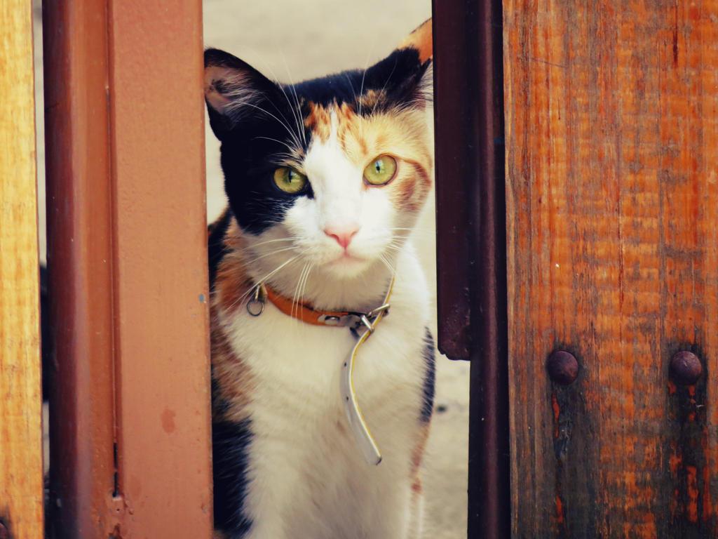 Here kitty kitty! by andreachichizola